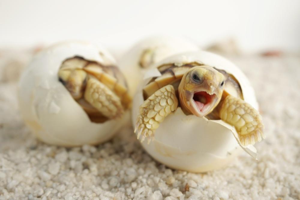 Digitally Native Vertical Brand Tortoise