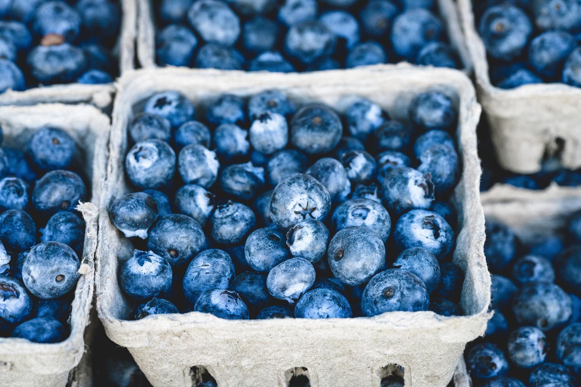 blueberries supply chain