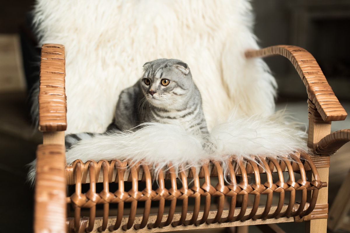cat on a rocking chair
