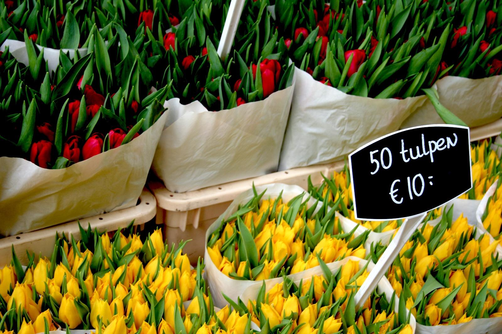tulips-MOQ.jpg